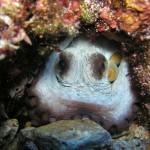 green bay octopus