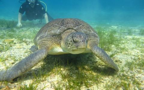 turtle_cyprusdivingcentre